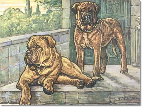 canine-color-plate-from-kamerad-hund-of-bull-mastiff