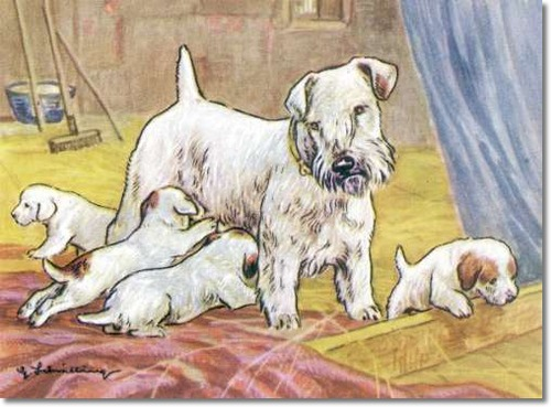 canine-color-plate-from-kamerad-hund-of-sealyham-terrier