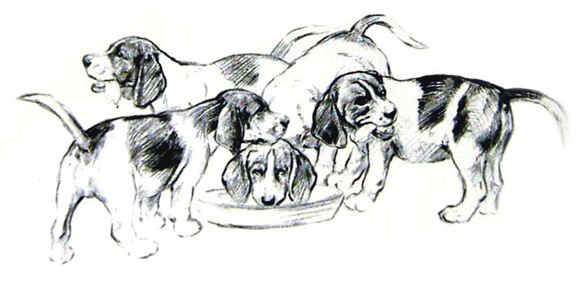 C1933-Dogs-Sketch-Barker-Beagle-Puppies-Singing-Pets