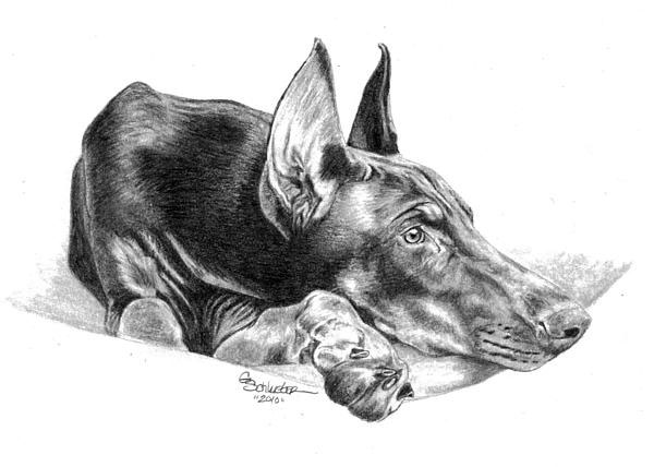 the-doberman-genevieve-schlueter